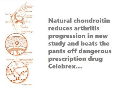 how chondroitin works