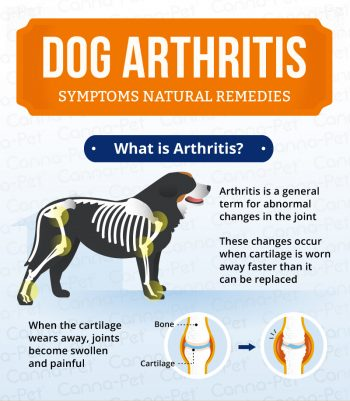 arthritis in dogs natural remedies