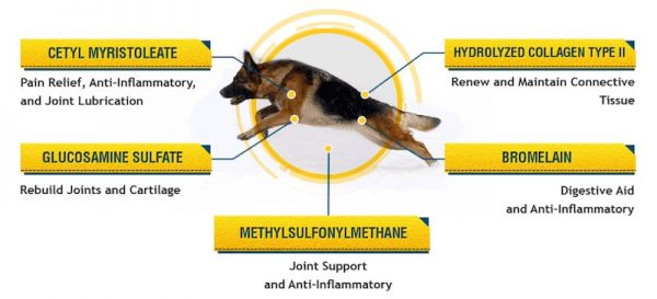 best supplement for dog joints
