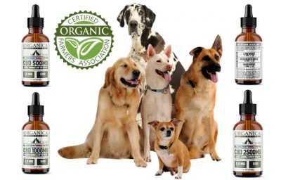Arthritis Pain Relief for Dogs
